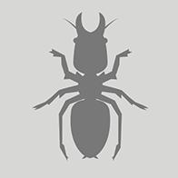 Major Termite Species In Sydney